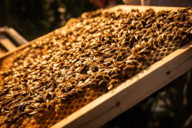 Hofbienerie Glueckliche Bienen
